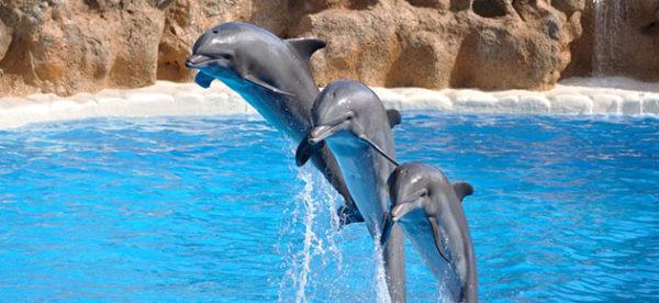 Les dauphins dans les parcs aquatiques